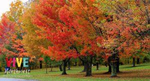 Guía para ver el follaje de otoño más hermoso en Oregon