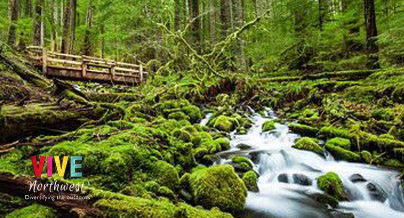 En este momento estás viendo Conoce el Parque Nacional Olympic de Washington, considerado el mejor parque nacional del país