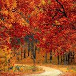 El otoño está aquí, y con él llegó el vibrante follaje característico del noroeste